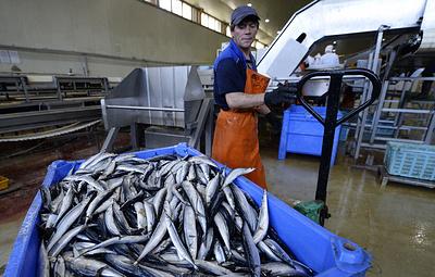 Россия получила право на экспорт рыбы и морепродуктов в Египет