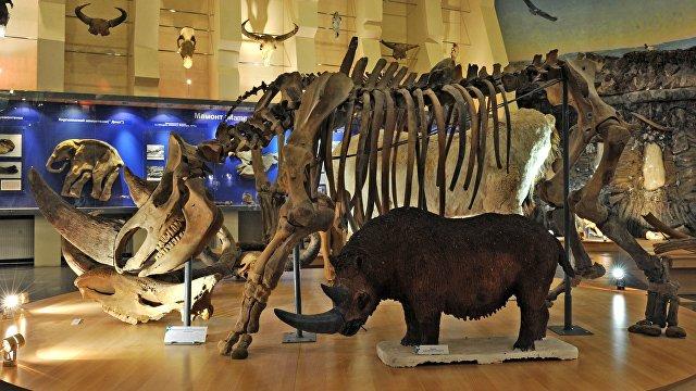 The Guardian (Великобритания): Сибирская вечная мерзлота хорошо сохранила тушу шерстистого носорога времен ледникового периода