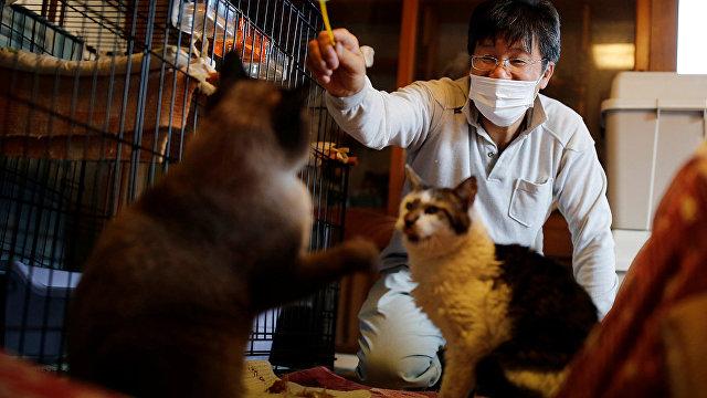 Reuters (Великобритания): человек, спасающий котов в зоне отчуждения в Фукусиме