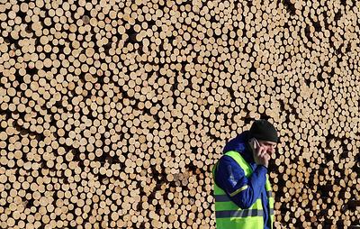 Госдума приняла закон о единой системе учета сделок с древесиной