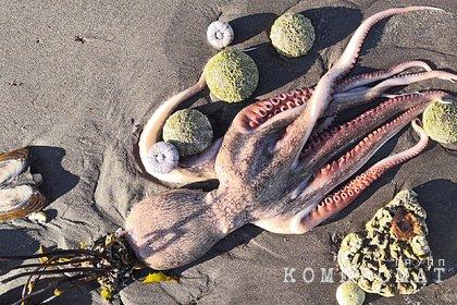 В РАН отвергли версию гибели морских животных на Камчатке из-за утечки химикатов