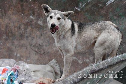 Бездомная собака напала на двухлетнего ребенка в российском городе