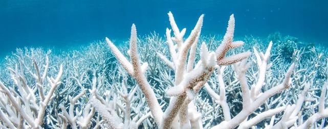 ООН сообщает, что Большой Барьерный риф находится в серьезной опасности