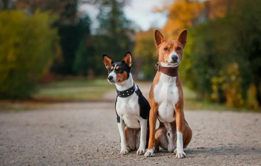 11 пород собак, которые почти не лают