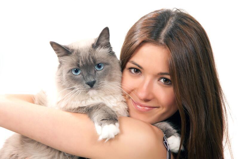 Домашние питомцы: почему кошки лучше собак