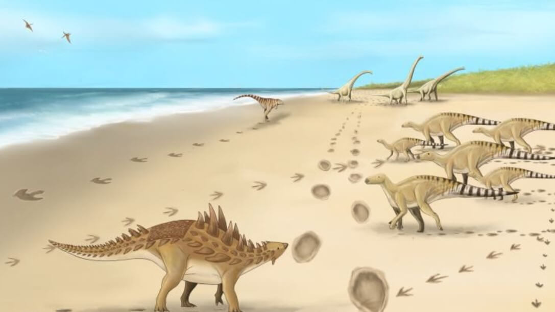 Ученые нашли окаменелые следы крупных динозавров. Почему это интересно?