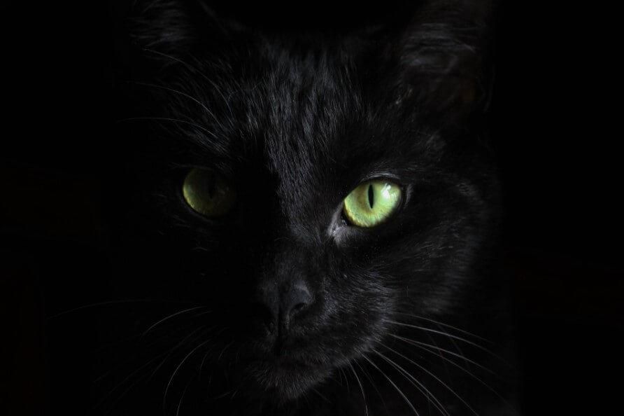Почему полностью черных котов очень мало? Причина таится в глубинах истории
