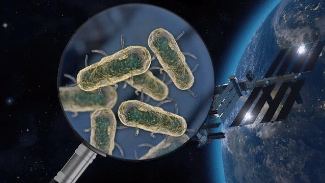 Космос повышает опасность бактерий. Чем это грозит космонавтам?