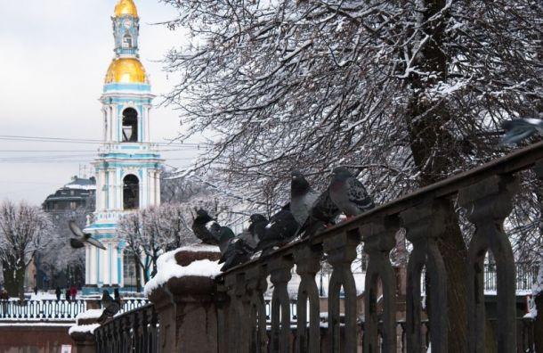 Циклон сохранит в Петербурге облачную погоду