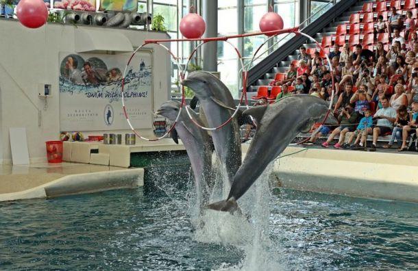 Петербуржцы выступили против строительства дельфинария на 'Академической'