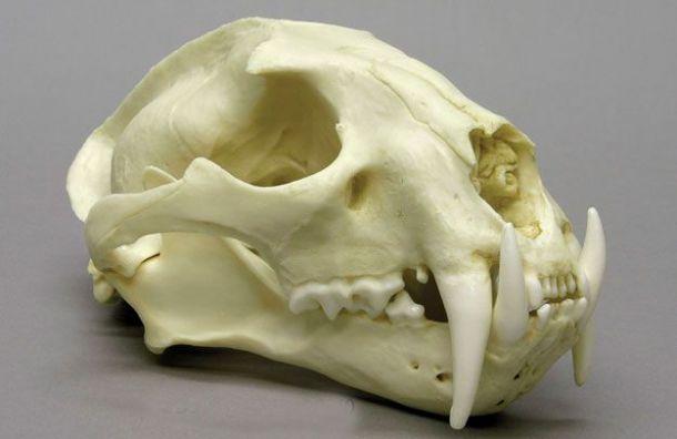 Неизвестные украли 50 редких черепов на 3,5 млн рублей
