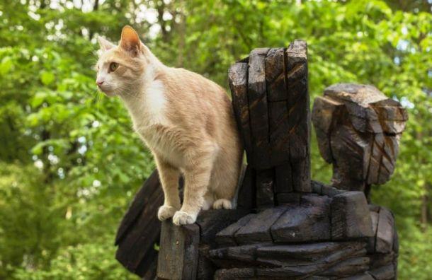 В котокультурной столице перепишут культурных котов
