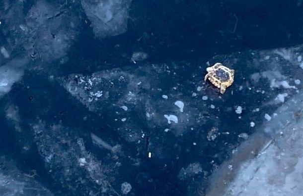 Петербуржцы спасли черепаху, которую выкинули на лед Большой Невки