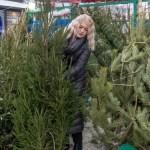 В Пятигорске откроются восемь елочных рынков