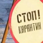 Карантин по бешенству ввели в двух населённых пунктах Ставрополья