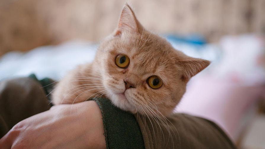 В учреждениях культуры в Петербурге проведут перепись котов