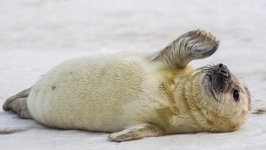 Прокуратура проверит обстоятельства массовой гибели тюленей в Дагестане