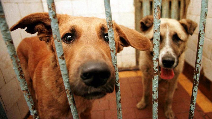 В Новосибирске сгорел питомник, где содержались почти 200 собак