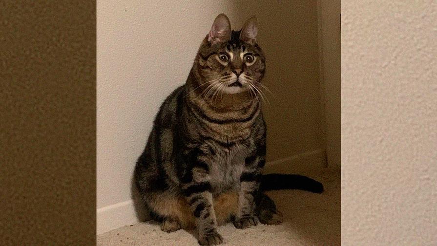 Толстый кот Орешек стал звездой соцсетей