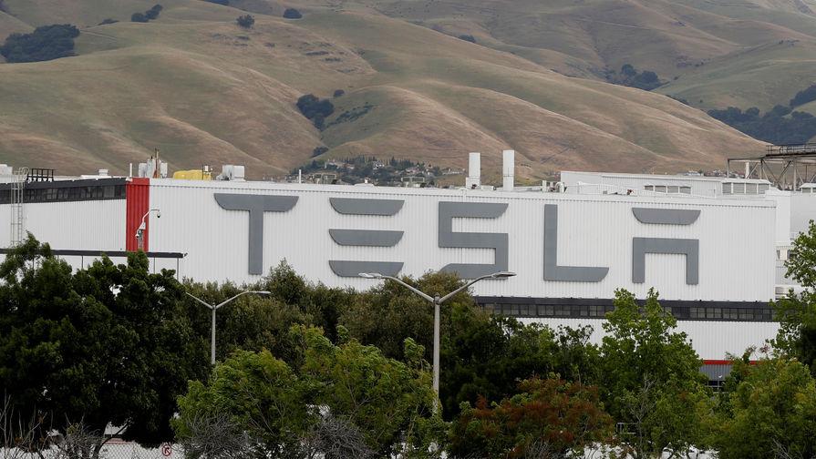 Вырубку леса под завод Tesla в Германии остановили из-за зимующих змей