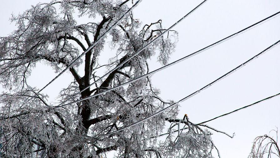 Ледяной дождь во Владивостоке повредил 80% деревьев