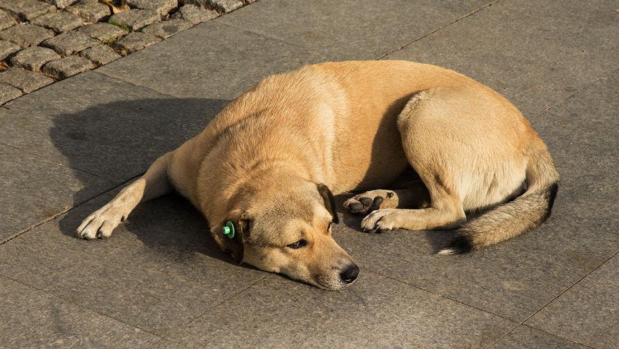 Кинолог рассказала, как определить тепловой удар у собаки по дыханию