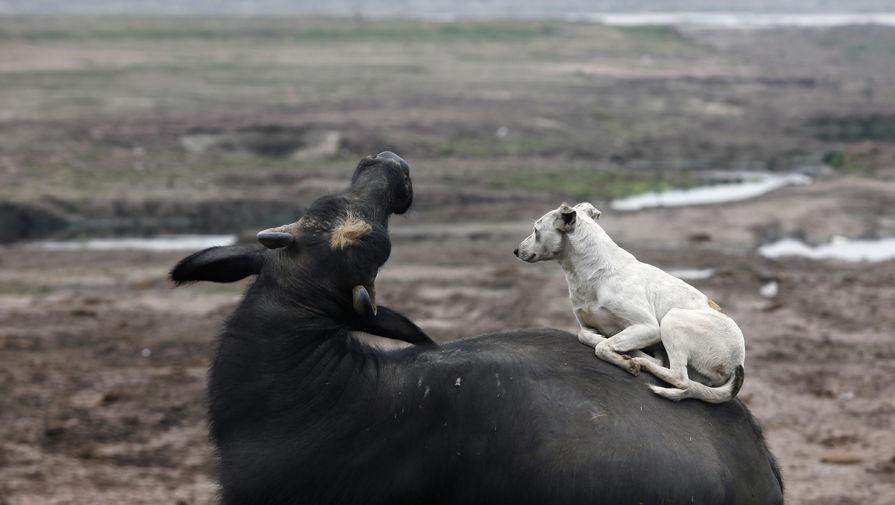 Мясо буйвола под видом говядины продавали в подмосковный интернат