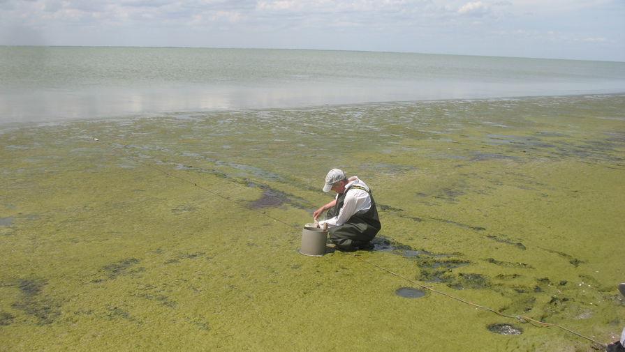 У водоросли в гиперсоленом озере Херсонесское обнаружены полезные антиоксиданты