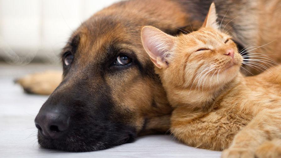 Госдума поддержала законопроект о запрете изъятия домашних животных за долги