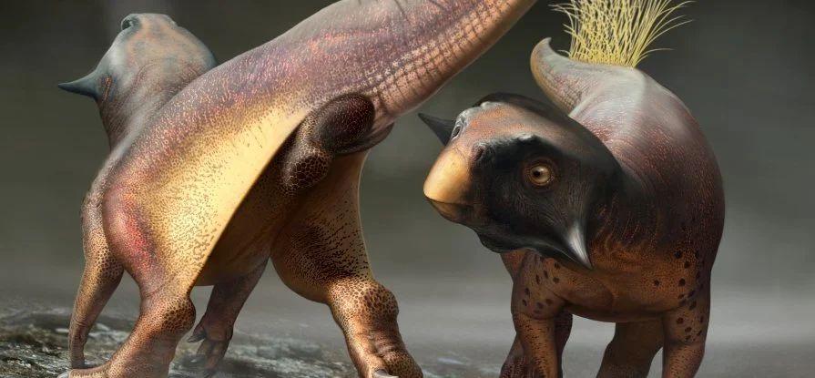 Ученые впервые узнали, что было между ног у динозавров