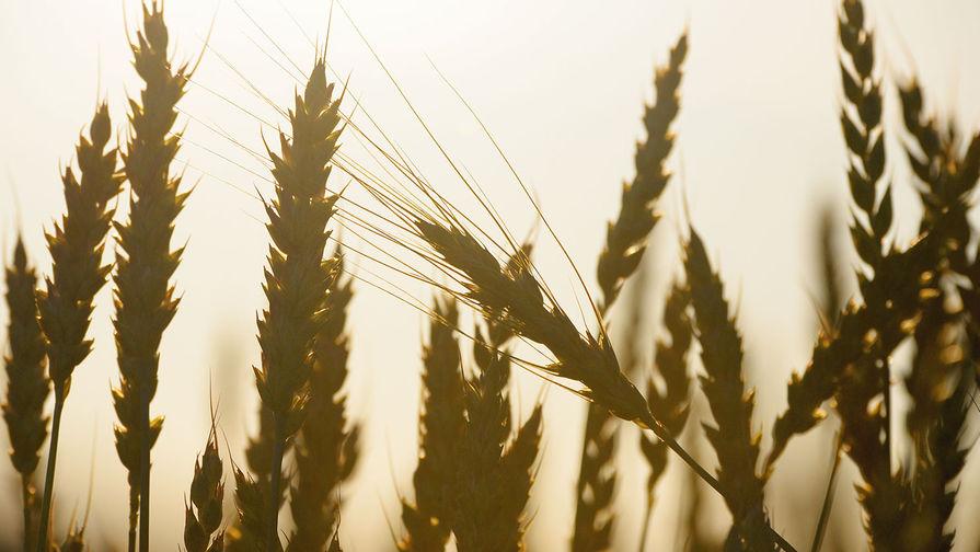 Мишустин подписал постановление о повышении пошлины на экспорт пшеницы