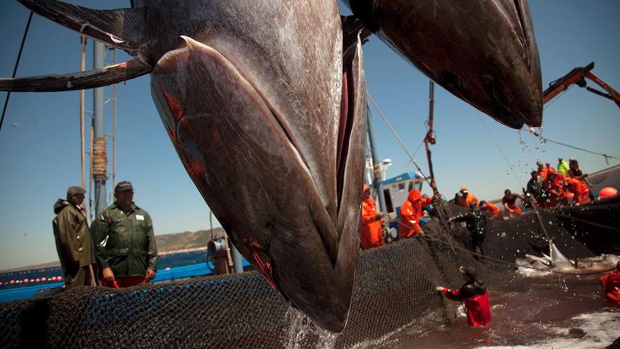Власти не видят предпосылок для роста цен на самую дешевую рыбу в России