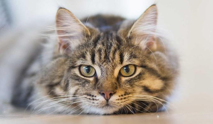 Сайт знакомств 'Мамба' взял под опеку бездомных котов