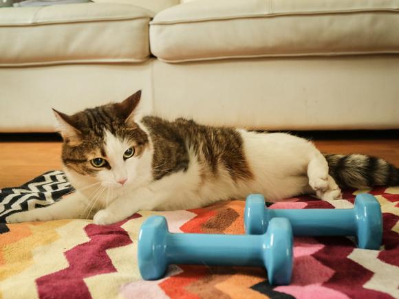 Биолог объяснил, почему нельзя бесконечно «тупить» на котиков в интернете
