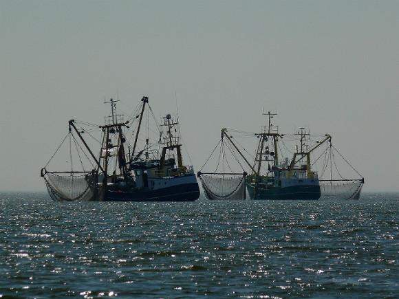 Дальневосточный полпред попросил китайцев снять ограничения на экспорт рыбы