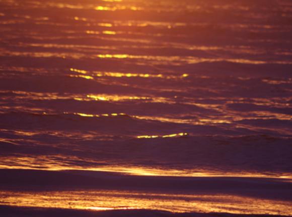 Тихий океан опять отравлен: акваторию порта Находка загрязнили нефтепродуктами