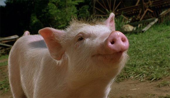 Отложите кусок сала: свиньи оказались отличными геймерами