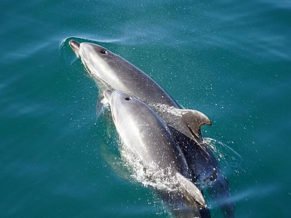 СМИ: В Ирландии заподозрили Путина в причастности к краже знаменитого дельфина