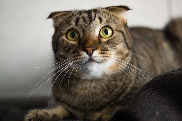Ученые нашли способ отучить кошек охотиться