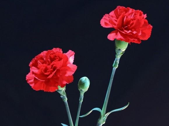 Умер сын уральского поэта Бориса Рыжего — в 27 лет, как и отец