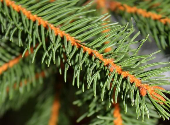 Правительство купило к Новому году датские елки почти на 3 млн рублей