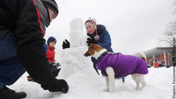 Пес спас мальчика от волка в Коми