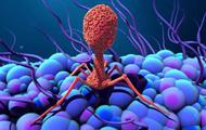 В кишечнике человека обнаружили 140 тысяч вирусов