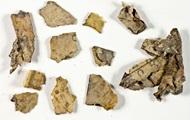 В Израиле обнаружили фрагменты библейского свитка