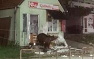Румынский курортный город 'оккупировали' медведи