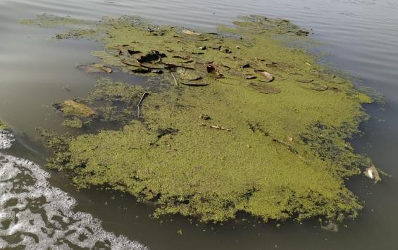 Курскую область отметили за хорошую экологию