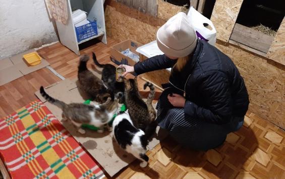 Партия 'За правду' помогла кошачьему дому