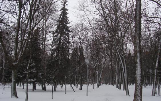 На сохранение лесов Курской области направлено 129 млн рублей