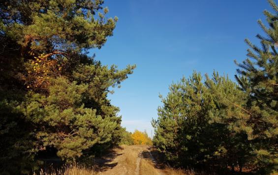 Вырубка деревьев обойдется курянину в 500 тысяч рублей