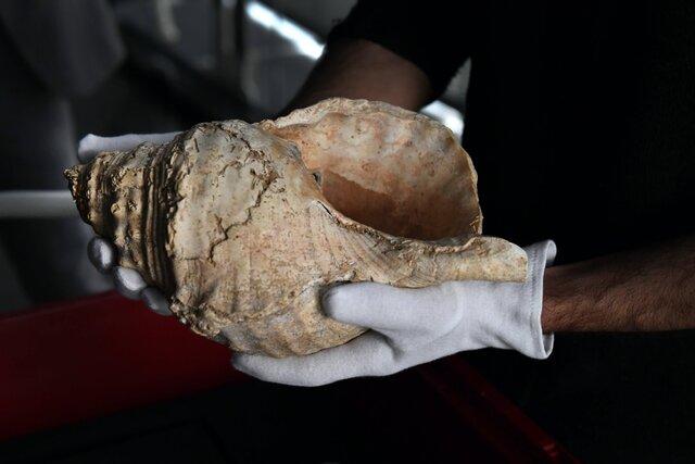 В 2020 году ученые заставили говорить древнеегипетскую мумию. Год спустя ей нашли музыкальный инструмент — раковину гигантского моллюска, которой 18 тысяч лет (в нее подудели!)